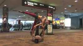 Picture of AcroYoga Basics: Inside Star Mount & Tick-Tock
